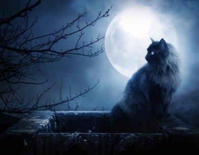 Full Moon & Xena
