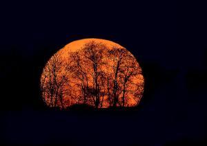 Harvest Moon 6