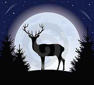 Full Moon - Hunter's